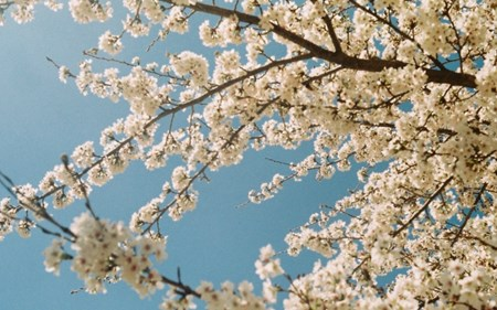 march-into-spring.jpg (1)